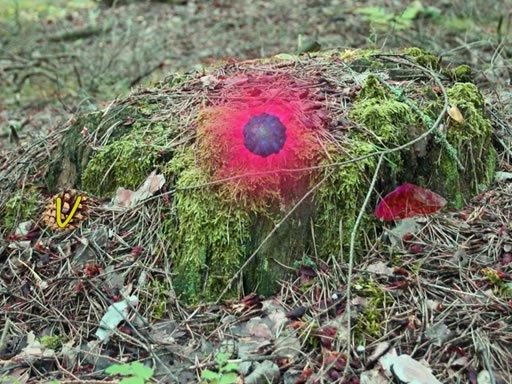 Jogo Mysterious Password Forest – Autumn Edition 2