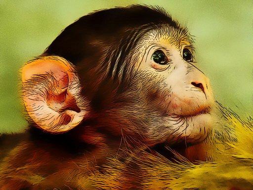 Jogo Funny Baby Monkey